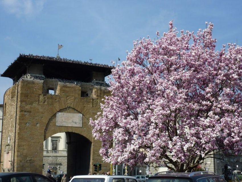 cerca Firenze  Beccaria / Oberdan APPARTAMENTO VENDITA